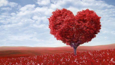 Plan Romantico en Hotel Galeon Inn Girardot - planes en girardot